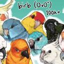 """birb (O v O"""") official discord"""