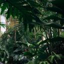 The deep jungles [RP]