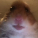 ! HAMSTERSTAN (autonomy without admins)