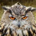 Angry Owl RP