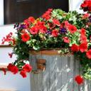 Floral Cesspool