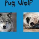 Pug Wolf