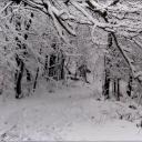 Warriors: Cold Winter