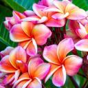 🌺The Flower Garden🌺