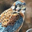 The Avian World : an Avian-Human RP