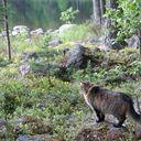 Warrior Cats : A New Aeon