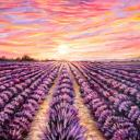 Fields of Lavender - Warrior Cats RP