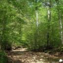 Preternatural Forest