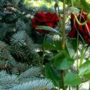 Amoroxia Pine Retreat