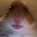 Hamster Hub