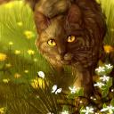 Into the Wild: Warrior Cats RP