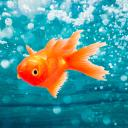 Drowning Fish