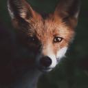 Animal Roleplay Server