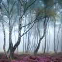 The Outcast Forest