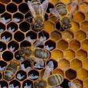 The Hive - Health & Wellness