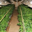 The Plantations