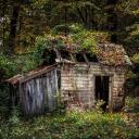 The Abandoned Shack