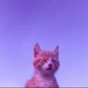 Cat Cult