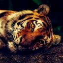 The Tiger's Den 19+