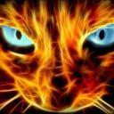 Warrior Cats: Elementals Within