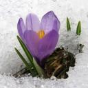 (ИВЕНТ) Логово Бандитов (Весна)