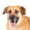 Dog Server