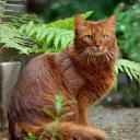 Flower (Warrior cats role play)