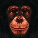 Random Chimp Event Preparation Squad