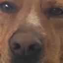 dead dog server
