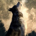 The Wolf Communications's Icon