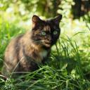 Warrior Cats: Broken Storm