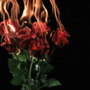 roses-community Logo
