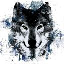🐺 TEAM WOLF 🐺