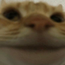THE CATE CULT's Icon