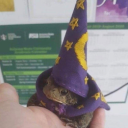Frog Wizards Lair