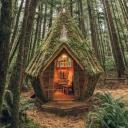 the crazy cat ladies cottage in the woods