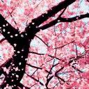 Tree of Love 16+