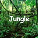 🌴🐒Jungle Town🐒🌴