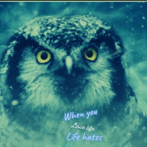 Logo for owl gang...