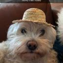 Call (hond met hoed)