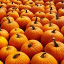 Pumpkin's Lounge