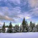 סמל של A Never-Ending Winter {RP}