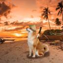 Doge land
