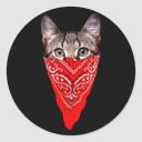 shazify08 Logo